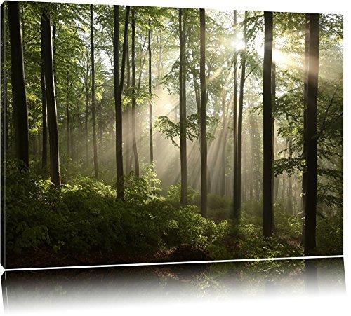 Sonnenstrahlen im Wald Format: 120x80 auf Leinwand, XXL riesige Bilder fertig gerahmt mit Keilrahmen, Kunstdruck auf Wandbild mit Rahmen, günstiger als Gemälde oder Ölbild, kein Poster oder Plakat