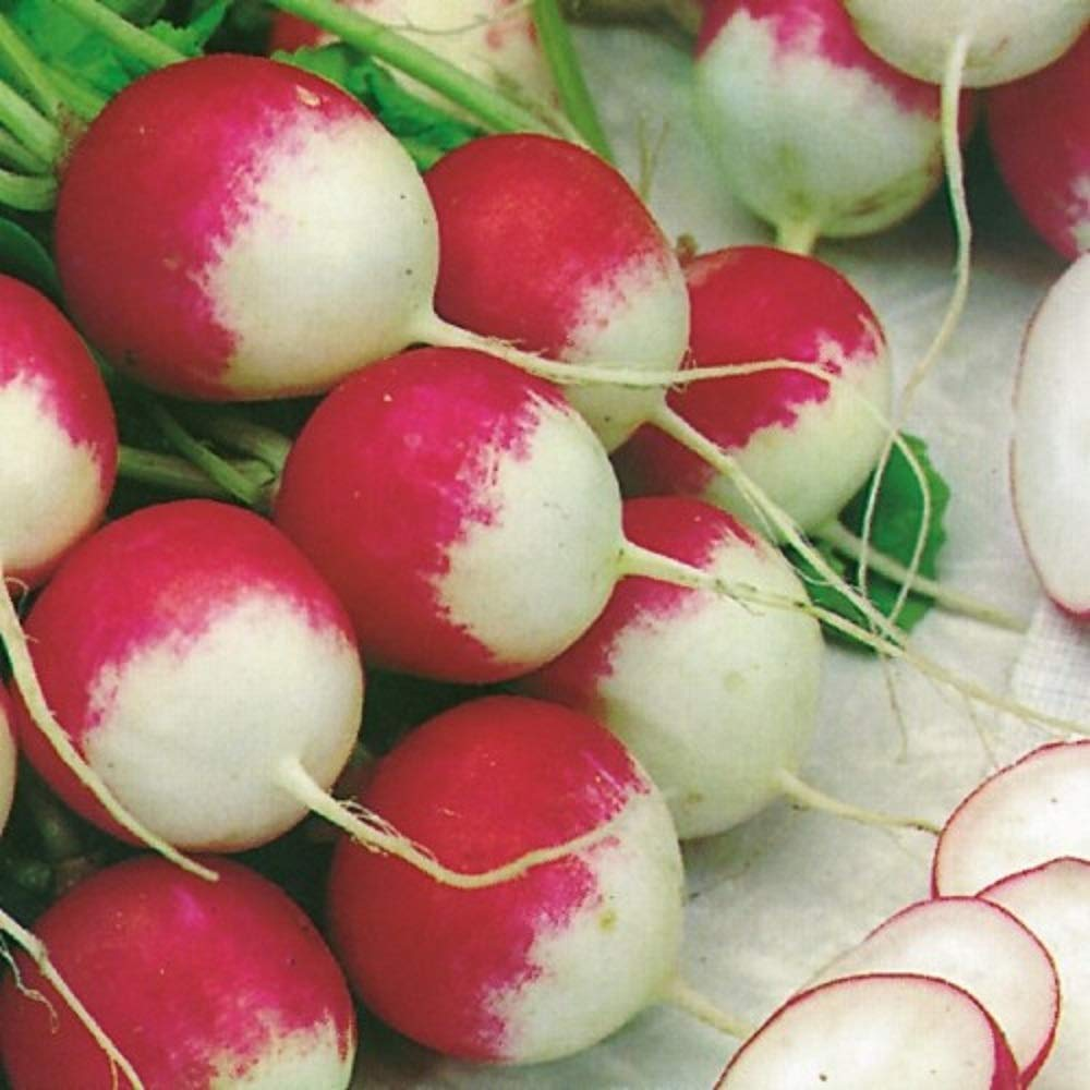 25+ pk Bunny Tail Radish Sprouting garden Seeds Home Seed Indefinitely trust