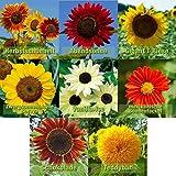 Sonnenblumen Samen Mix 8 Sorten Sonnenblumensamen Riesig bis klein | 10-12 Samen je Sorte | Riesensonnenblume Sommerwiese Schmetterlingsblumen Samen geliebt von Hummeln und Bienen