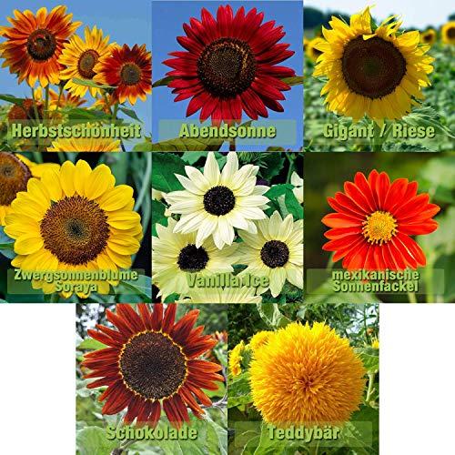 Sonnenblumen Samen Mix 8 Sorten Sonnenblumensamen Riesig bis klein | 10-12 Samen je Sorte | Riesensonnenblume Sommerwiese Schmetterlingsblumen Samen...