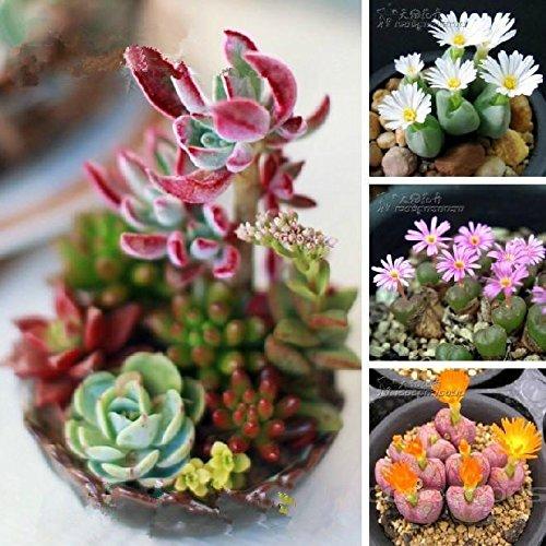 Mélanger les plantes succulentes graines Lithops Pierre Fungi graines charnues Bonsai plantes Semences pour la maison et le jardin 100 graines / sac