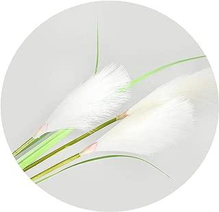 Best dried pampas grass australia Reviews