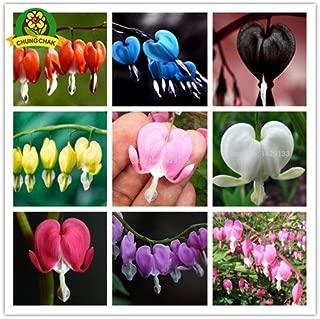 Best bleeding heart flowers for sale Reviews