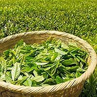 グリーンティー(Green Tea) ハイグレード アロマクラフト用 フレグランスオイル10ml