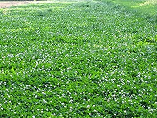 Durana Food Plot Clover Seeds - 3 Lbs. (Plants 1/2 Acre)
