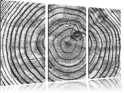 boomringenFoto Canvas 3 deel | Maat: 120x80 cm | Wanddecoraties | Kunstdruk | Volledig gemonteerd