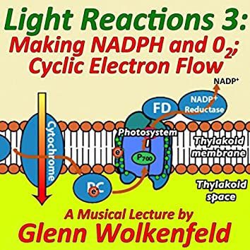 Light Reactions 3: Making Nadph and O2; Cyclic Electron Flow
