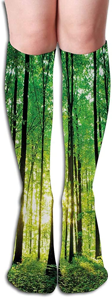 Men's and Women's Funny Casual Combed Cotton Socks,Green Woodland at Sunrise Scenic Morning Nature Environment Ecology Serenity
