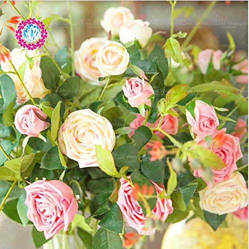 100pcs colorés Graines Rose avec bord rouge, fleur couleur rare jardin populaire Graines vivaces Bush ou Bonsai mélange de fleurs