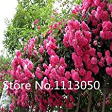 3 : Sale! 200Pcs 10 Kinds Bonsai Polyantha Rose Seeds Organic Blooming Flower Seeds Garden Plant