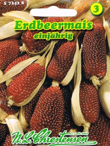 Erdbeermais Zea mays Mais Trockenblume hochwachsende Maisart