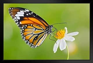 Monarch Butterfly on Flower Photo Black Wood Framed Art Poster 20x14