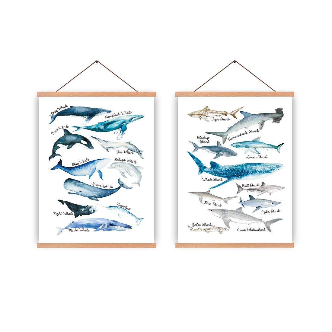 Fish Laminated Educational Science Teacher Classroom Chart Print Poster 24x36