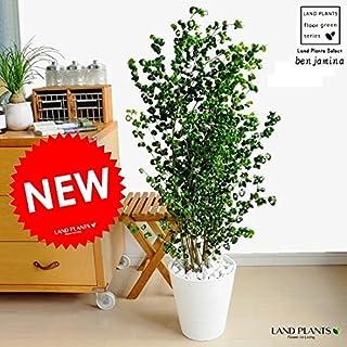 LAND PLANTS ベンジャミン バロック 白セラアート鉢