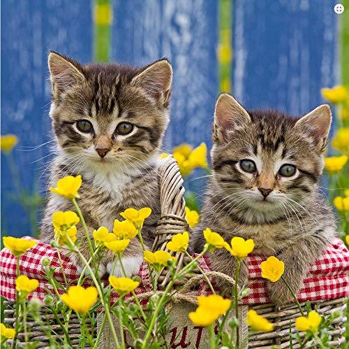 La Kelnet microvezeldoek voor het poetsen van bril - katten in de mand met gele bloemen - geschikt voor alle optische oppervlakken (18,5 x 18,5 cm) - wasbaar