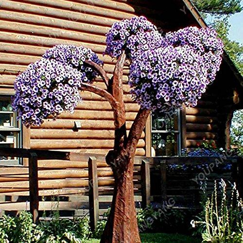 100pcs/Paquet Pétunia Graines de fleurs jardin semences Bonsai Graines Petunia Mirage multi-couleurs Sélection facile à cultiver Livraison gratuite Jaune clair