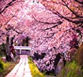 JAPANESE SAKURA FLOWERING CHERRY Tree Seed - Prunus serrulata Seeds - Cherry Blossom - By MySeeds.Co