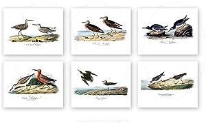 Beach Decor Sea Birds Wall Art Set of 6 Unframed 8x10