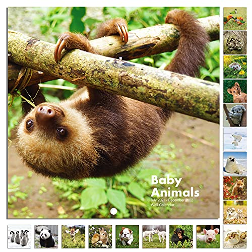 2021-2022 Calendar - Baby Animals Wall Calendar 2021-2022 from Jul 2021 - Dec 2022, 12 x 12 inches, Thick & Sturdy Paper
