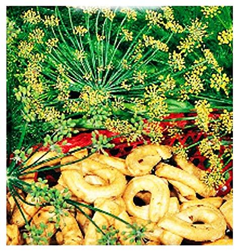 Graines de fenouil sauvage - légumes - foeniculum vulgare capillaceum - environ 120 graines - les meilleures graines de plantes - fleurs - fruits rares - fenouil sauvage - excellente qualité