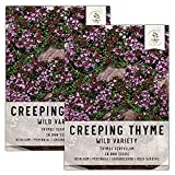 """Quality Creeping Thyme seeds packaged by Seed Needs. Intended for the current and the following growing season. Packets are 3.25"""" wide by 4.50"""" tall and come with a full colored illustration on the front side, as well as detailed sowing instructions ..."""