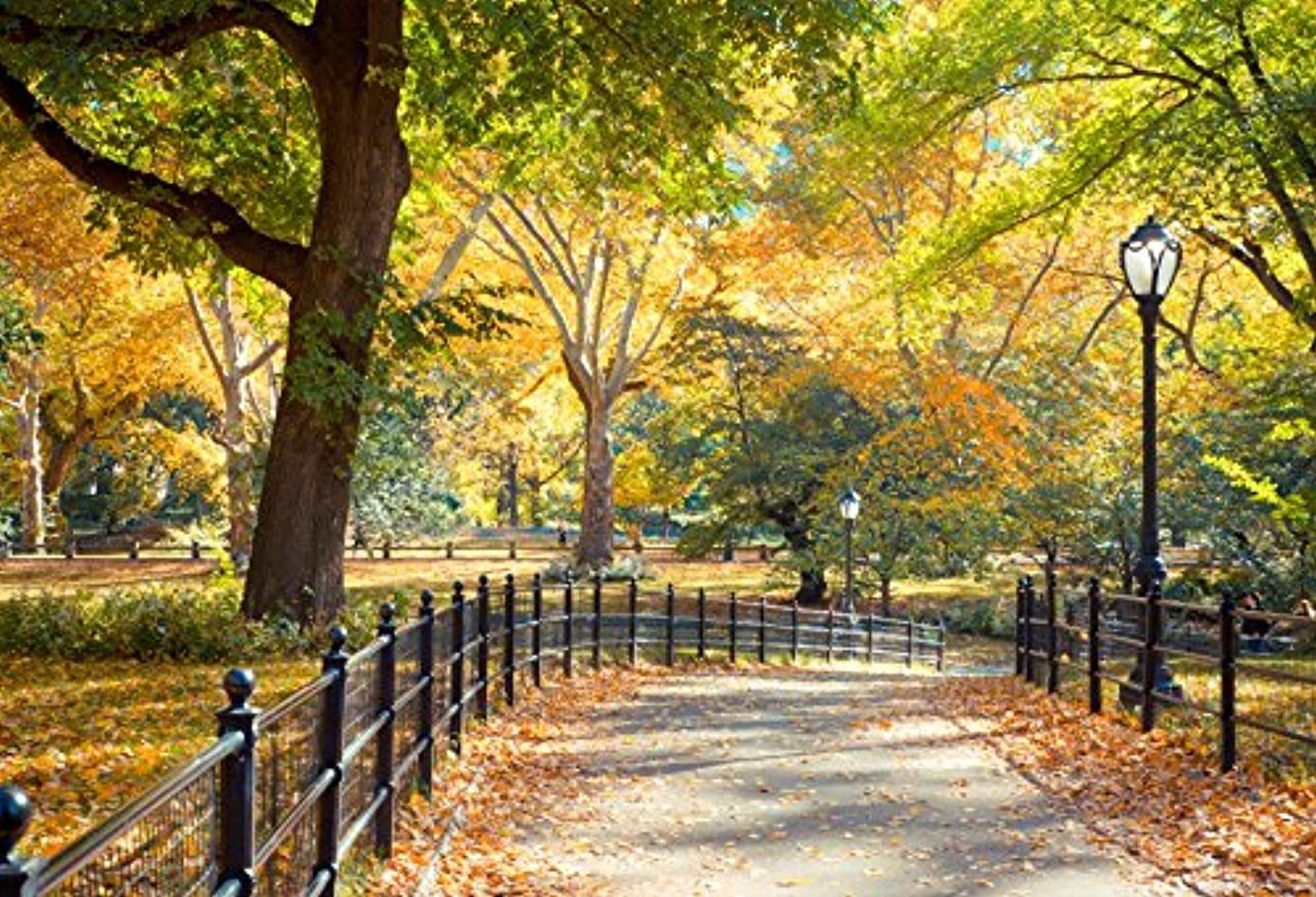 Laeacco New York City Central Park Photography Background 10x6.5ft Coloful Autumn Day Backdrops Landscape Road Lamp Fallen Leaves Trees Natural Backdrops Studio Photographic Props