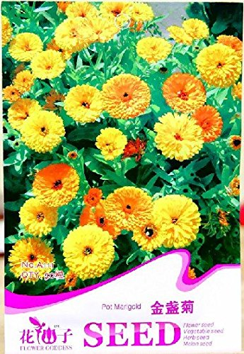 Jaune anglais Marigold (Calendula officinalis) Graines, emballage d'origine, 50 graines / Pack, Bonsai Pot Marigold Flower Seeds A111