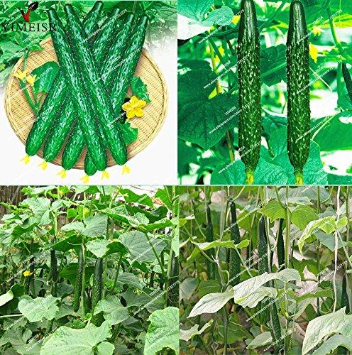 20pcs / sac graines de concombre long, cucumb chinois Graines de légumes biologiques graines cucumbe rares de fruits pour le jardin à la maison