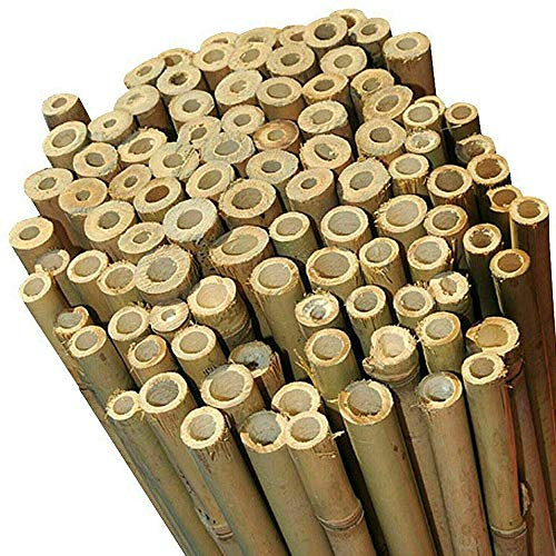Homatz 2FT 3FT 4FT 5FT 6FT 7FT 8FT Bamboo Garden Canes Strong Thick (12mm-14mm) Quality Support Natural Canes | 6FT, 10 Pack |