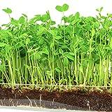 Microgreen Organic Pea Shoot 3 Pack Refill KIT–Pre-Measured Soil +...