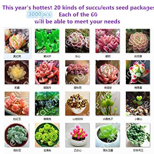 1200pcs 20kinds importations allemandes de fleurs en pot succulentes sedum rayonnement paquets de graines charnues livraison gratuite