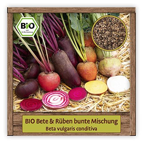 BIO Rüben & Beten Samen Mischung Gemüsesamen bunte Rüben & rote Bete
