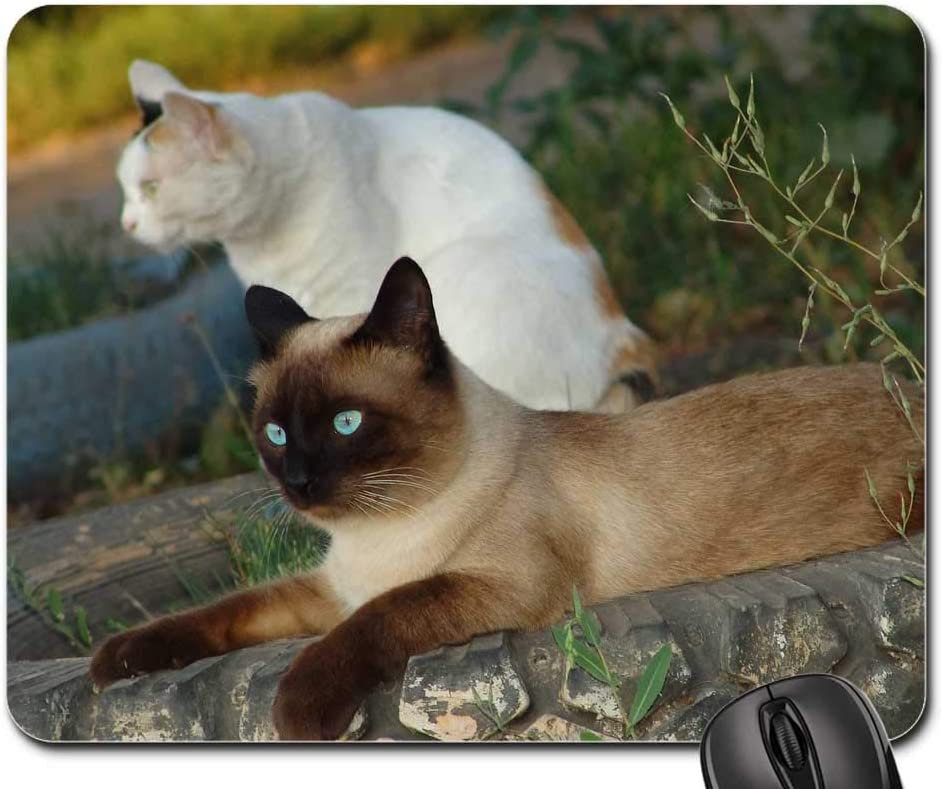 Mouse Pad - Cats Cat Eyes Pets Denver Mall Siamese Max 48% OFF Pet Looking