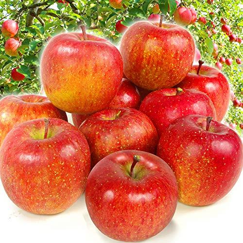 国華園 青森産 ご家庭用サンふじ 5�s1箱 りんご