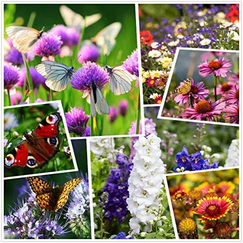 Tutto il mix annuale di semi di fiori selvatici di colore grande - Varietà (seme vivo puro al 100%) Semi non OGM Confezione sfusa da 50.000 semi