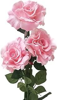cutipol goa pink rose gold