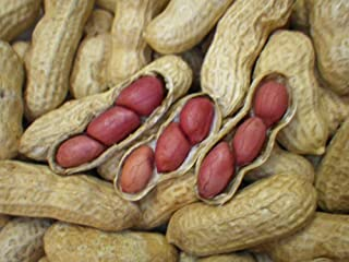 Tennessee Red Valencia Heirloom Peanut Seeds 10-15 Peanuts 8gm~Open-Pollinated