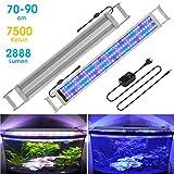 BELLALICHT Éclairage LED pour Aquarium Lampe Rampe 135 LED Aquarium d'eau Douce RGBW ou Bleu Lumieres 22W LED pour 70-90CM Aquarium - 7500K