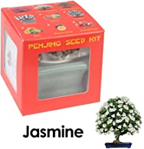 Eve's Garden Jasmine Penjing Seed Kit, the Chinese art of Bonsai, Complete Kit to Grow Flowering Jasmine Penjing from Seed