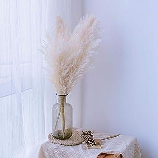 ASTONISH I semi della confezione 100Pcs 100-500pcs Canne colorate Pampas ornamentale Seed Bonsai Semi Erba Fiore Giardino