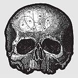 Black Pearl 10' (Die Cut Skull Pic Disc)