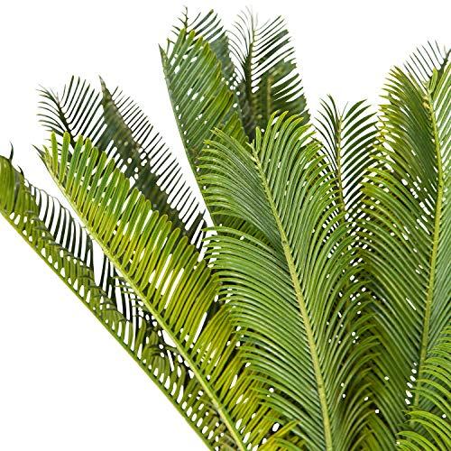 hjh OFFICE Kunstpflanze Cycas Palme Höhe 70 cm Grün 24 Palmwedel Kunstpalme klein Cycaspalme Palmfarn künstlich, 871004 - 2