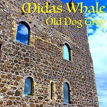 Midas Whale