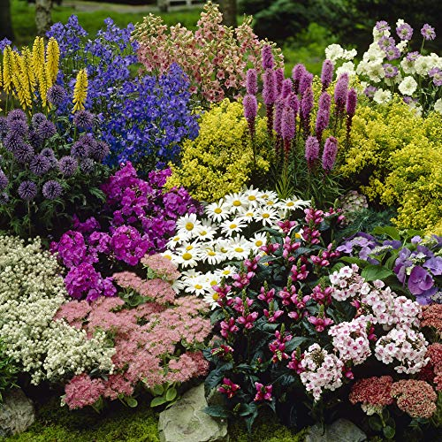 YouGarden Hardy Perennial Border Collection 12 Plants in 9cm pots, Mixed