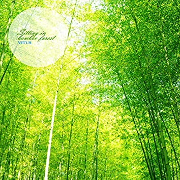 Sitting in a bamboo forest