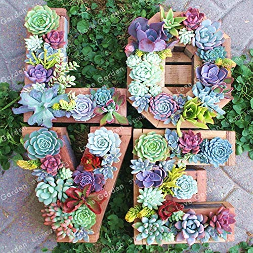 Bloom Green Co. 100pcs Lithops Bonsai Living Stone Flower Cacti Cactus Bonsai Rare Succulent Bonsai Colorful Meaty Plant Easy Grow Garden