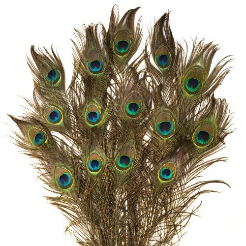 Rosemarie Schulz Lot de 15 Plumes de Paon Naturelles 80cm de Long