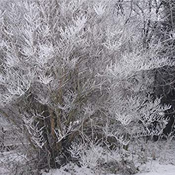 Ravel's Icy December