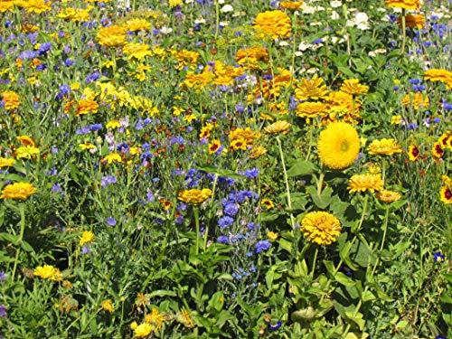 Blumenmischung Blumenteppich Chambord Z905 (25 g)