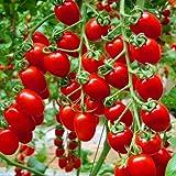100–Graines de Tomate de l'héritage grecque douce jardinage semis de plantes non OGM vegetable Seeds pour jardin cadeau plantation envoyé